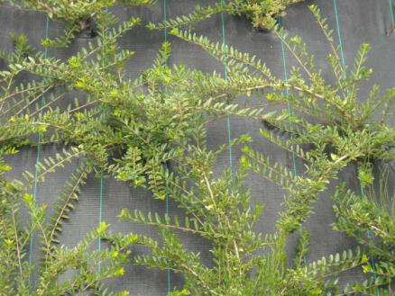 Anti-worteldoek 100g/m² 2,10 m zwart per lopende meter
