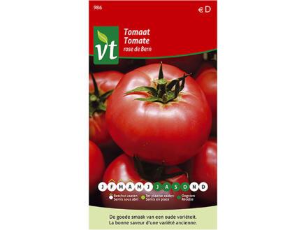 Rose de Bern tomaat