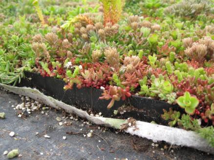Toiture végétale instantanée 60x40 cm