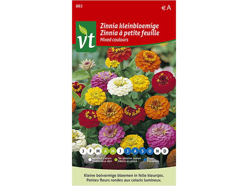 Zinnia kleinbloemig multicolor